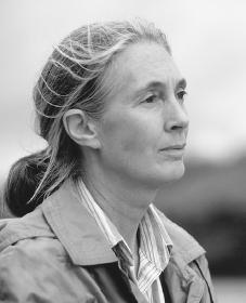Jane Goodall. Reproduced by permission of the Corbis Corporation.